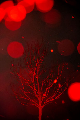 redtree.png