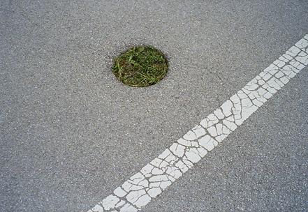 grassinroad.png
