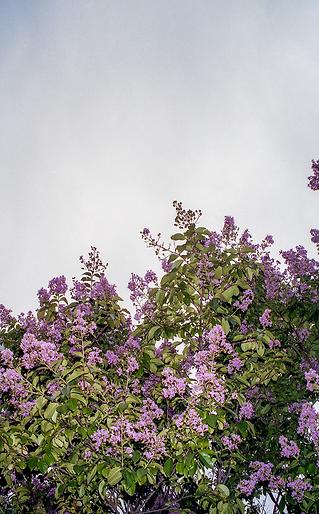 jerseyflowers.png