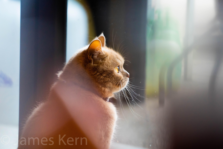 Orange Cat Cafe-2