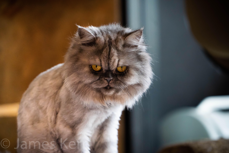 Grumpy Face-2