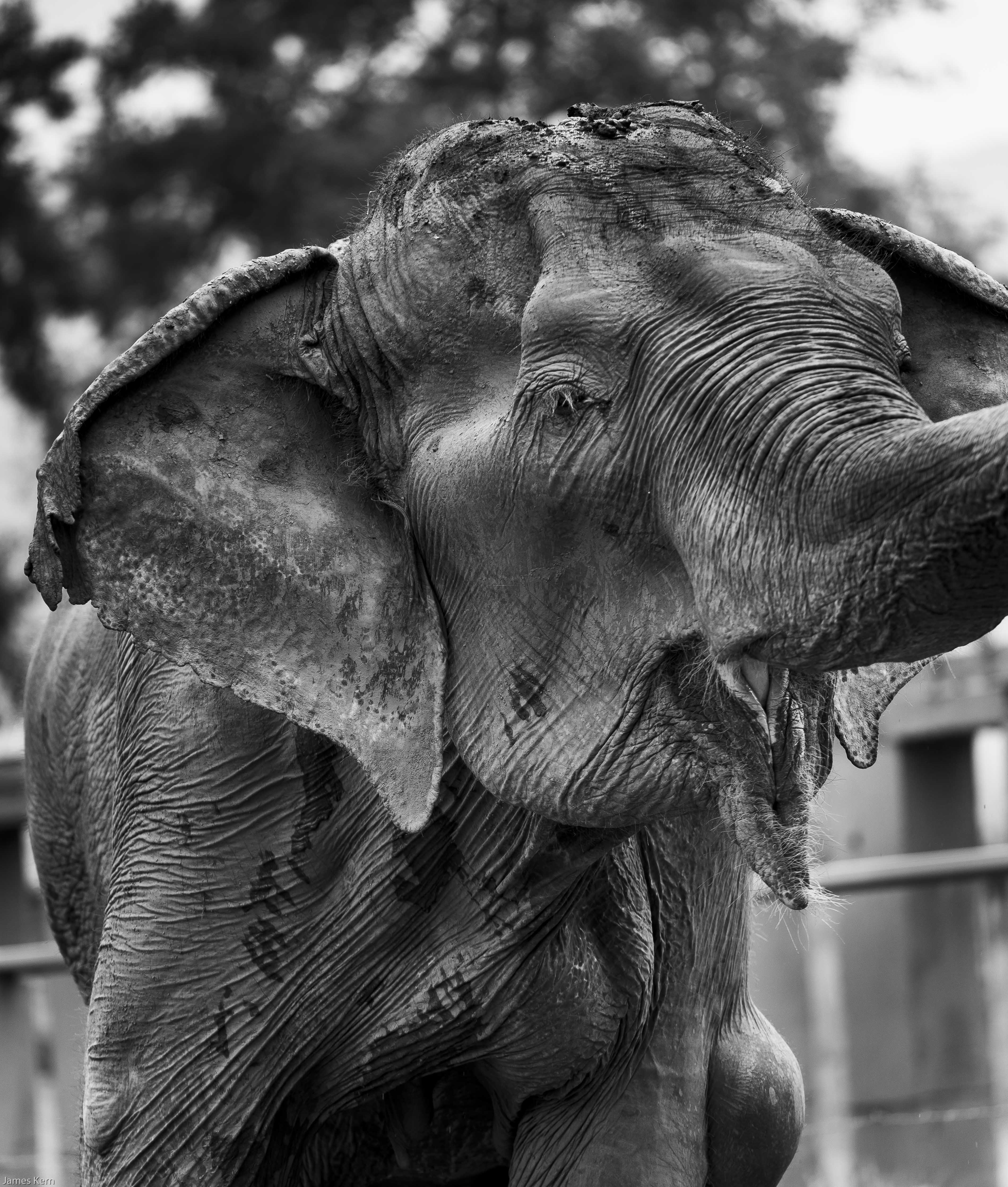 Granny Elephant