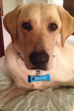 Blue Steel Dog Tag