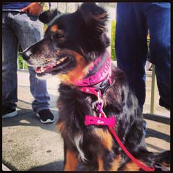Pink dog tag parade