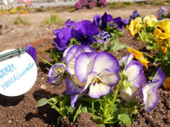 緑ある街づくりお花でいっぱいにしよう松島校区環境美化活動