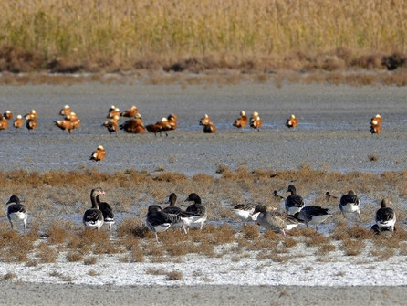 Урочище «Гусиная падь» на Цимлянском водохранилище стало пересадочной станцией для перелетных птиц