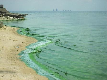 Нефтепродукты в реке Дон от Волгодонска до Ростова обнаружил Росприроднадзор