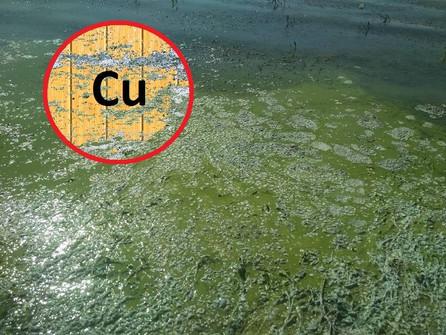 Одним из главных загрязнителей Цимлянского водохранилища признали тяжелый металл
