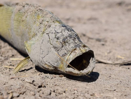 Почему в Дону почти исчезла рыба