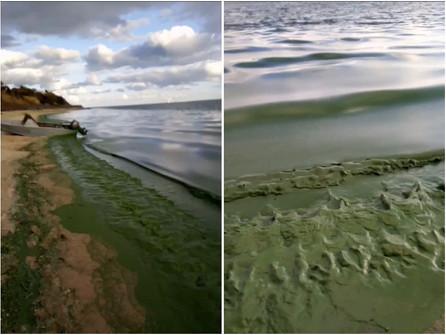 Видео с запахом: во что превратилось Цимлянское водохранилище