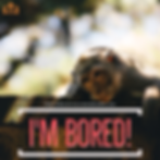 I'm Bored! - Cover.png