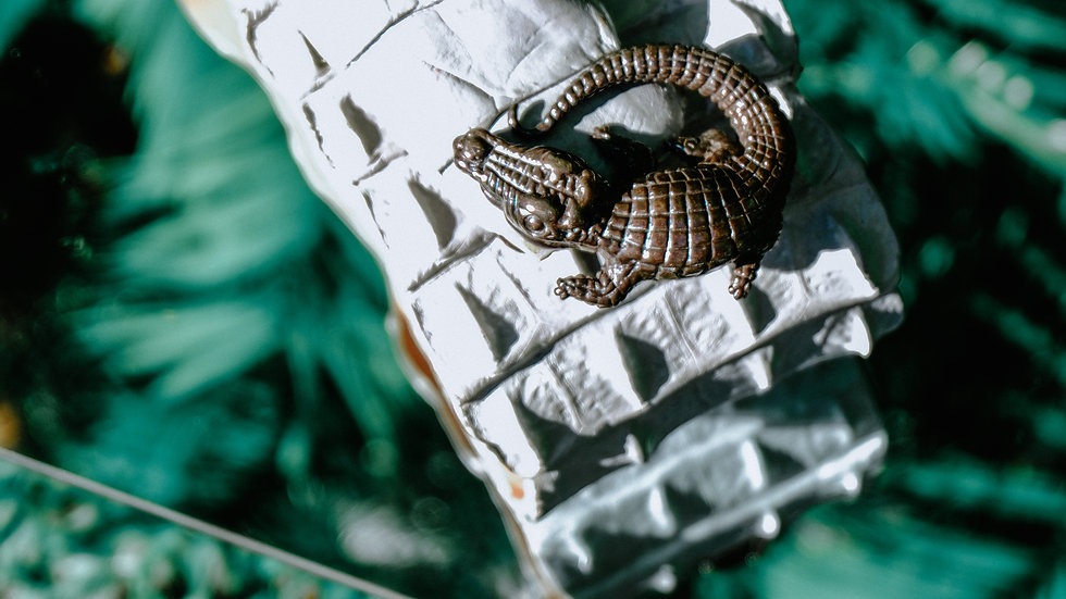 Silver Crocodile Tail Belt with 925 Sterling Silver Crocodile Brooch