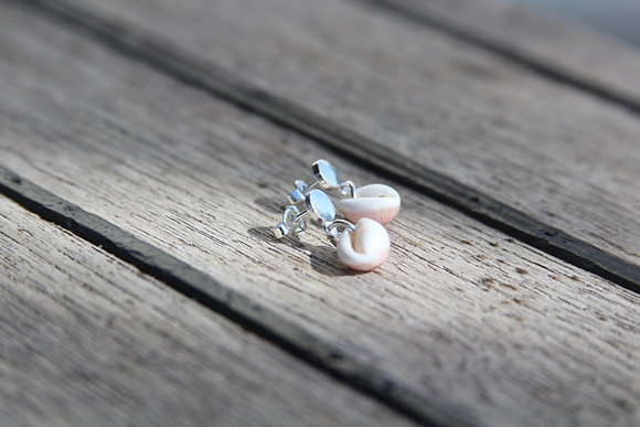 Simple Cowrie Shell Stud Earrings