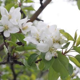 51C_Blossom_Photography