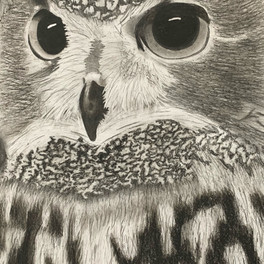 41A_Nocturnal_charcoal_16x22