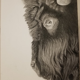 38A_Buffalo_charcoal_21.5x12.25