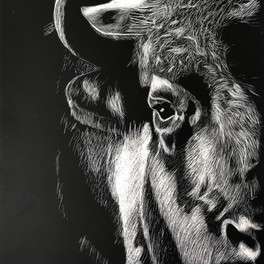 15C_Buffalo_Acrylic_10.5x13.5