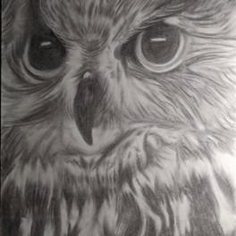 44A_Charcoal Owl_11x14.jpg