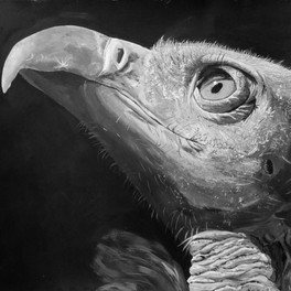 34A_The Vulture_acrylic_16x18.5