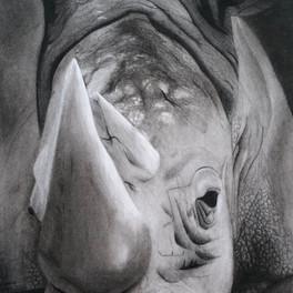 4A_Rhino_Charcoal_14x23