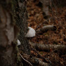 8B_Mushroom_photography
