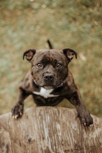 Lemmikkieläin, lemmikkikuvaus, koirakuvaus, koirakuva, lemmikin valokuvaus, tampere, pirkanmaa