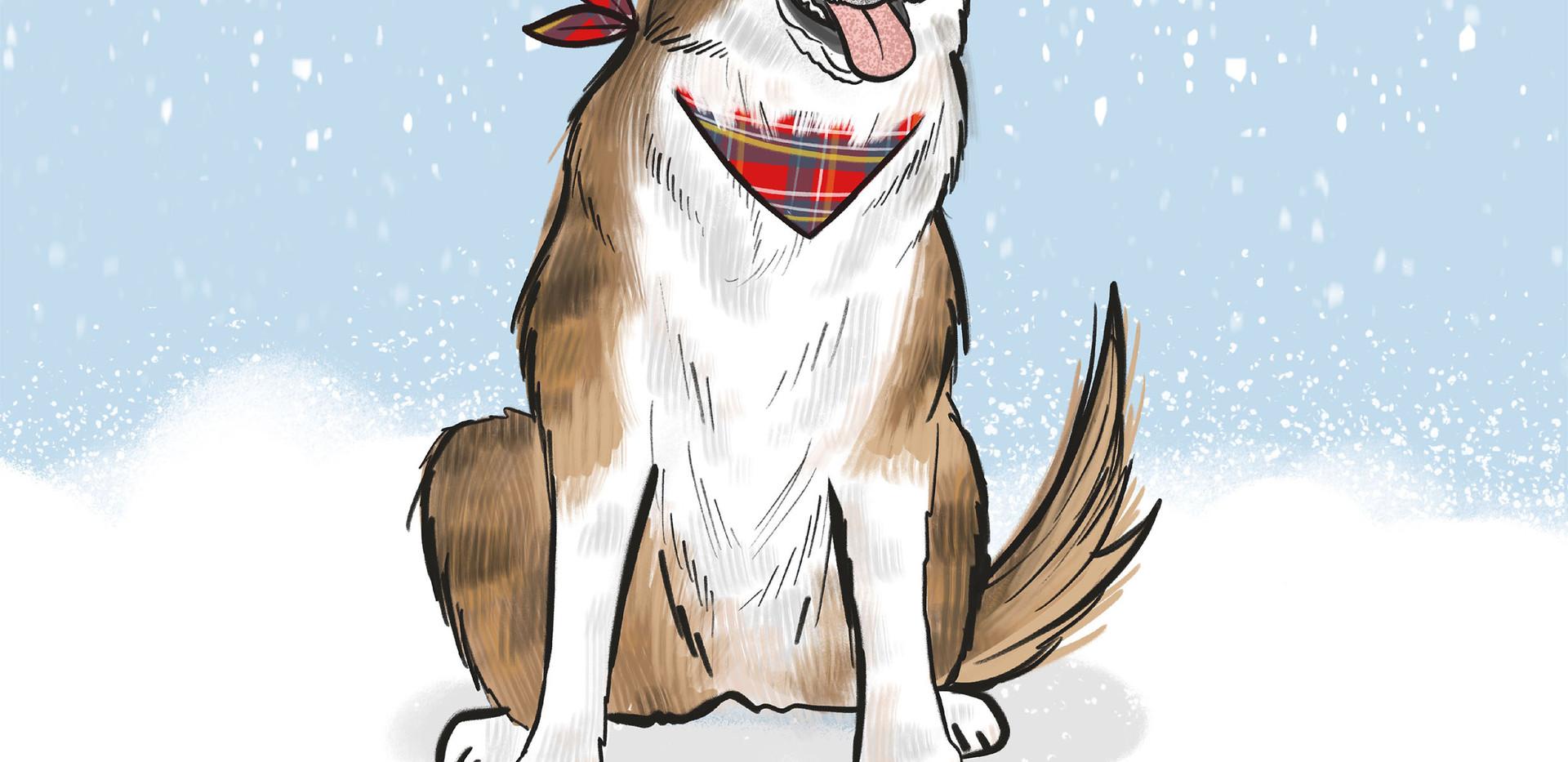 dog in snow portrait.jpg