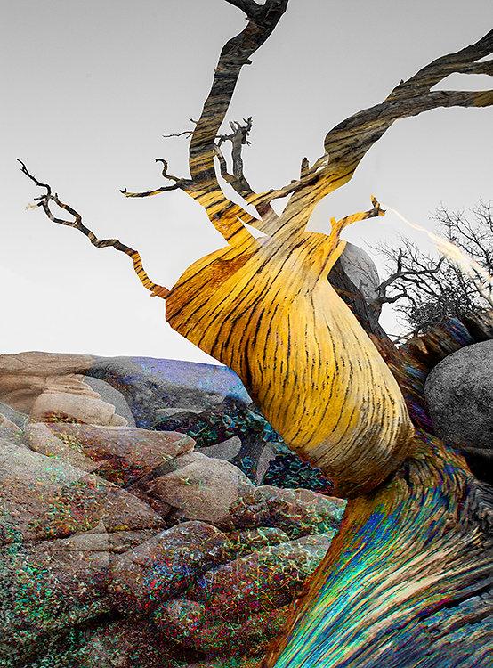 Cocooned in the Desert (002).jpg