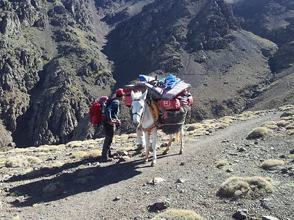 Mule and Muleteer carrying gear up to the refuge in the High Atlas