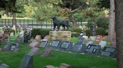 Animals-Remembered Association