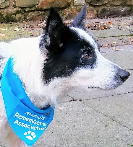 Animals-Remembered Association Dog Bandana