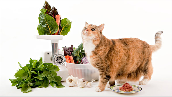 12 Foods Your (Cat?) Wants You To Eat