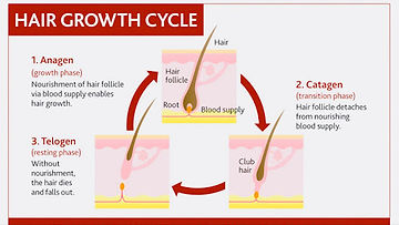 hair growth stages.jpg