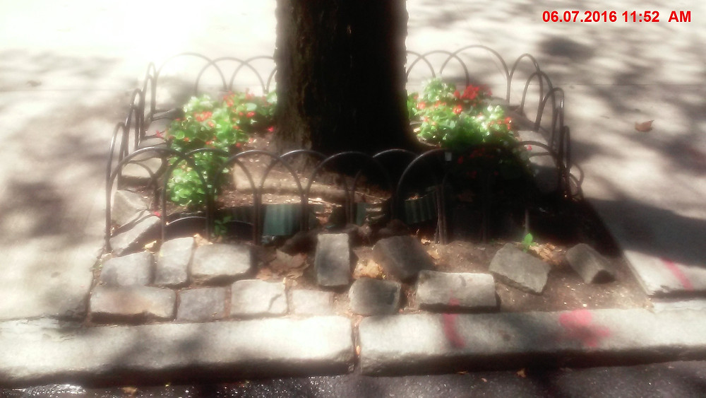 NYC 4'x5' tree bed w uplifting cobblestone border