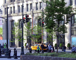 Certified ConsultingArborist Street Trees for Historic Building