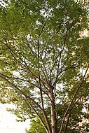 TreesNYC.com