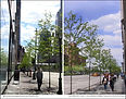 NYC Urban Streetscape Forestry