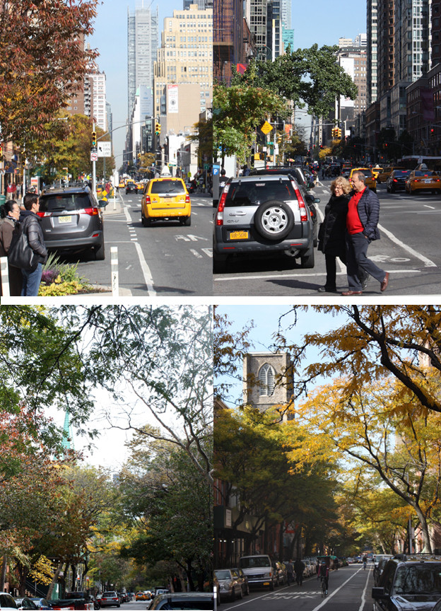 NYC Streets and Related Tree Canopies