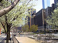Battery Park West Thames Park Trees