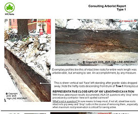 HLA Parks CA Report Perfect Root Profile.JPG