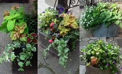 Chelsea Street Entry Court Planters