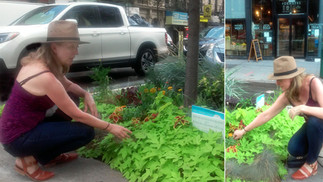 'SUNKEN BUCKET' GARDEN SUCCESS in NYC Chelsea High Traffic Avenue  22.8 S  2nd Edition | Cha