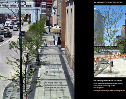 Certified ConsultingArborist  9A Street Trees & Paving Details