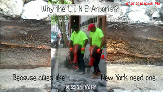 WHY A 'LINE' ARBORIST?