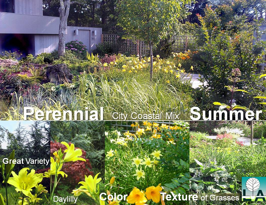 SUMMER in the CITY PERENNIALS
