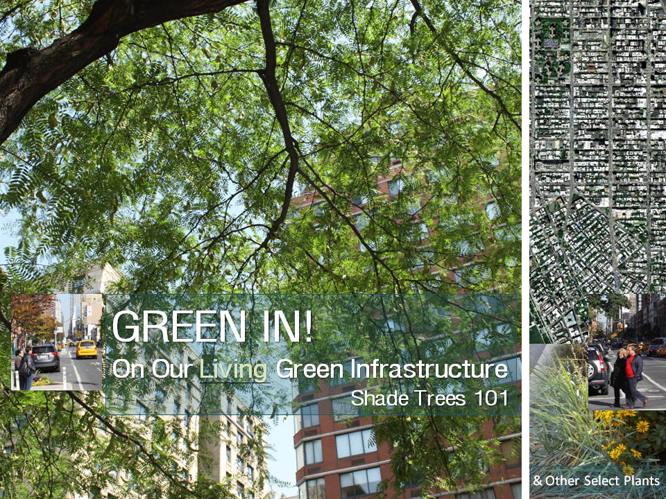 GREEN IN! City Shade Trees 101