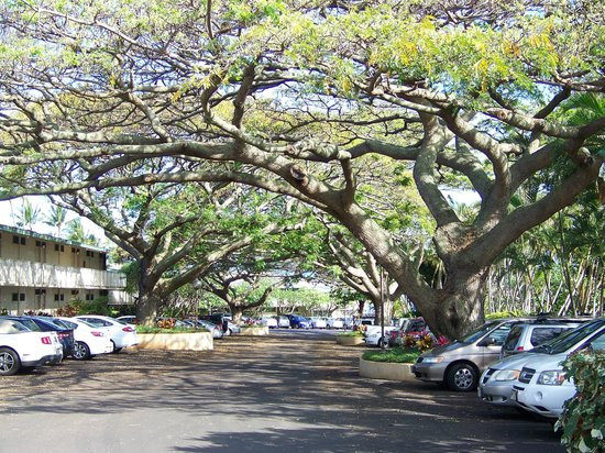Effective shade tree canopy cover