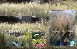 MULTI SEASON GRASSES