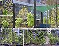 BPC Playground Landscape Tree Plantings