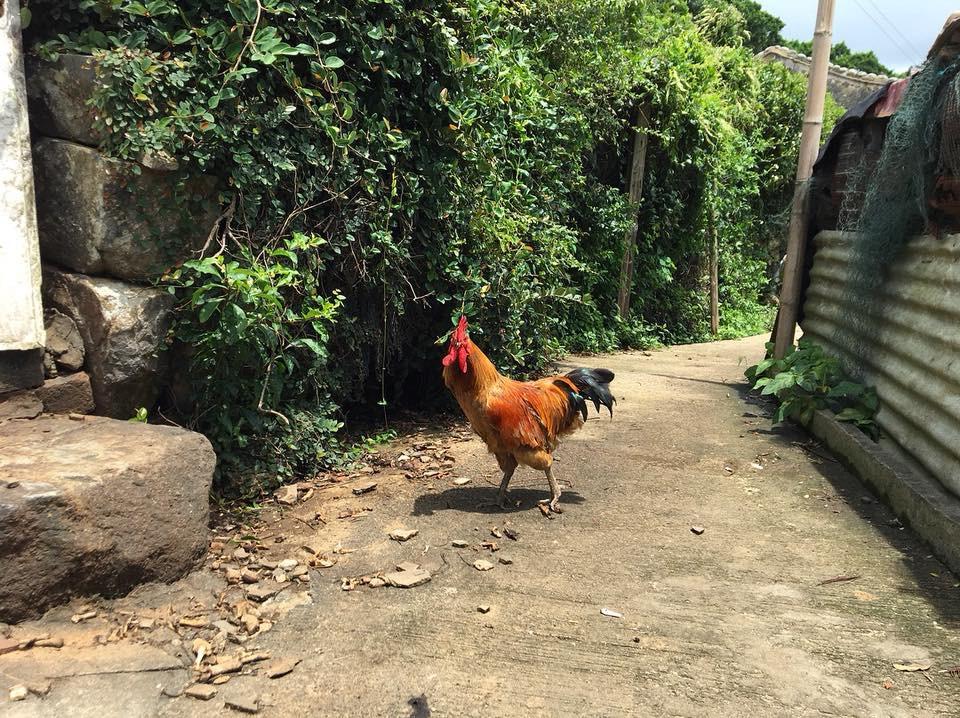 隨雞取景,漫遊西坵